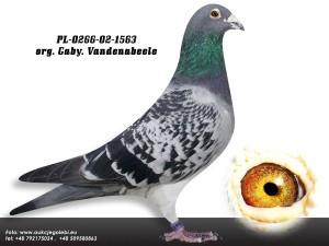 11PL-0266-02-1563 org Gaby Vandenabeele ed1